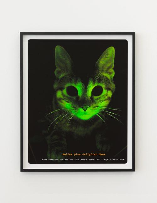 Lynn Hershman Leeson<br> <i>Feline-Jellyfish</i>, 2014<br> Edition 2 of 6<br> Archival digital print<br> Image size: 24.5 x 20 inches / 62.2 x 50.8 cm<br> Framed size: 25.1 x 20.5 inches / 63.75 x 52 cm