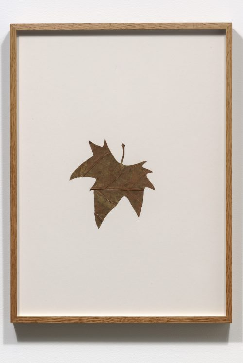 Amikam Toren <br/><i>Hybrids (IV) </i> <br /> Organic material on card <br /> 20 x 14 3/4 inches<br /> 1978-1979