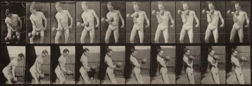 Eadweard Muybridge<br> <i>Curling a 50-lb. dumbbell.,</i> 1887<br> Collotype<br> Image: 6 1/8 x 17 7/8 inches / 15.6 x 45.4 cm<br> Sheet: 19 x 24 inches / 48.3 x 61 cm<br> Plate 324