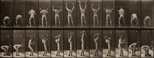 Eadweard Muybridge<br> <i>Lifting and letting down two 50-lb. dumbbells.,</i> 1887<br> Collotype<br> Image: 6 3/8 x 16 3/4 inches / 16.2 x 42.5 cm<br>  Sheet: 19 x 24 inches / 48.3 x 61 cm<br> Plate 323