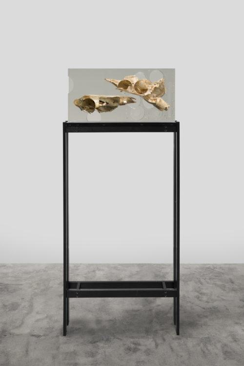 <i>Dark Silhouette: Bodily Study Ungulate Composition,</i><br> Boar skull, antelope skull, polyurethane resin, anodized aluminum, acrylic<br> Sculpture: 10 x 19 3/4 x 3 3/4 inches 25.4 x 50.2 x 9.5 cm<br> 2018