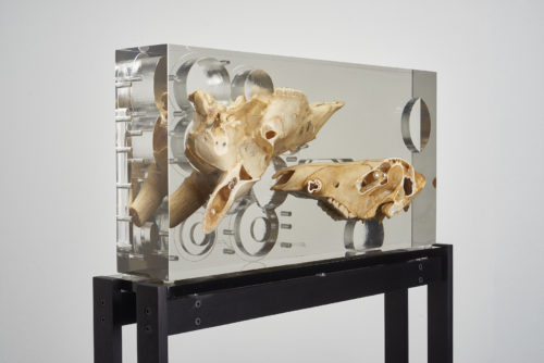 Matthew Angelo Harrison<br>  <em>Dark Silhouette: Bodily Study Ungulate Composition</em>, 2018<br>  Boar skull, antelope skull, polyurethane resin, anodized aluminum, acrylic<br>  54 x 21 3/4 x 4 3/4 inches / 137.2 x 55.3 x 12.1 cm